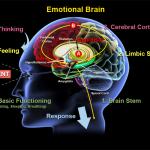 Understand Your Emotional Brain