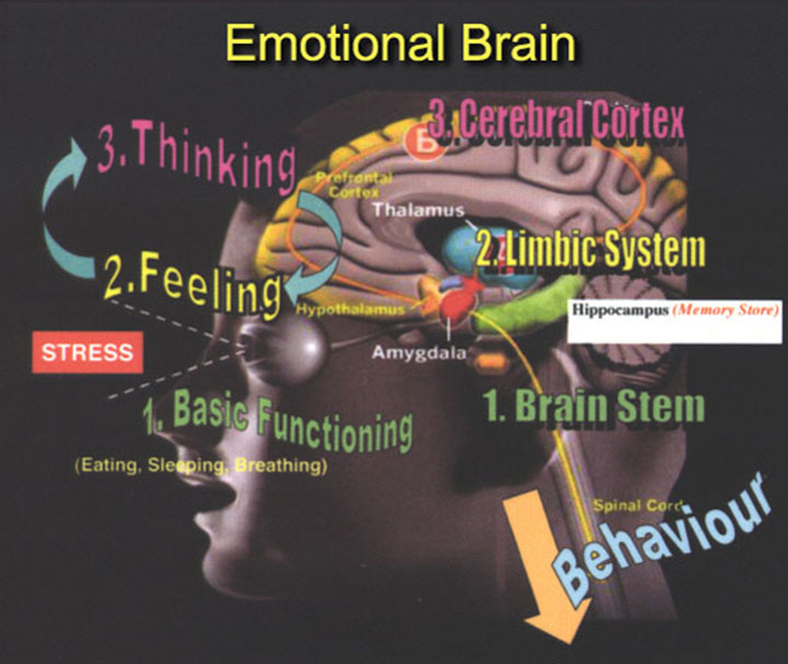lets learn about serotonin